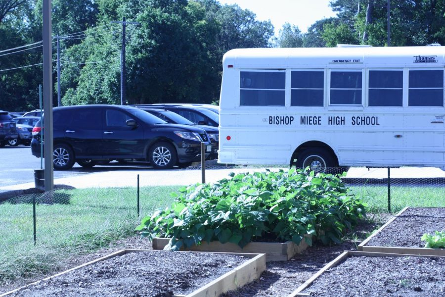 Kolbe Benes' garden brings life to the Miege parking lot on a sunny day.